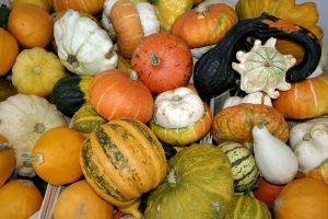 -_Pumpkins_-