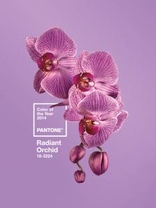 radiantorchid2014