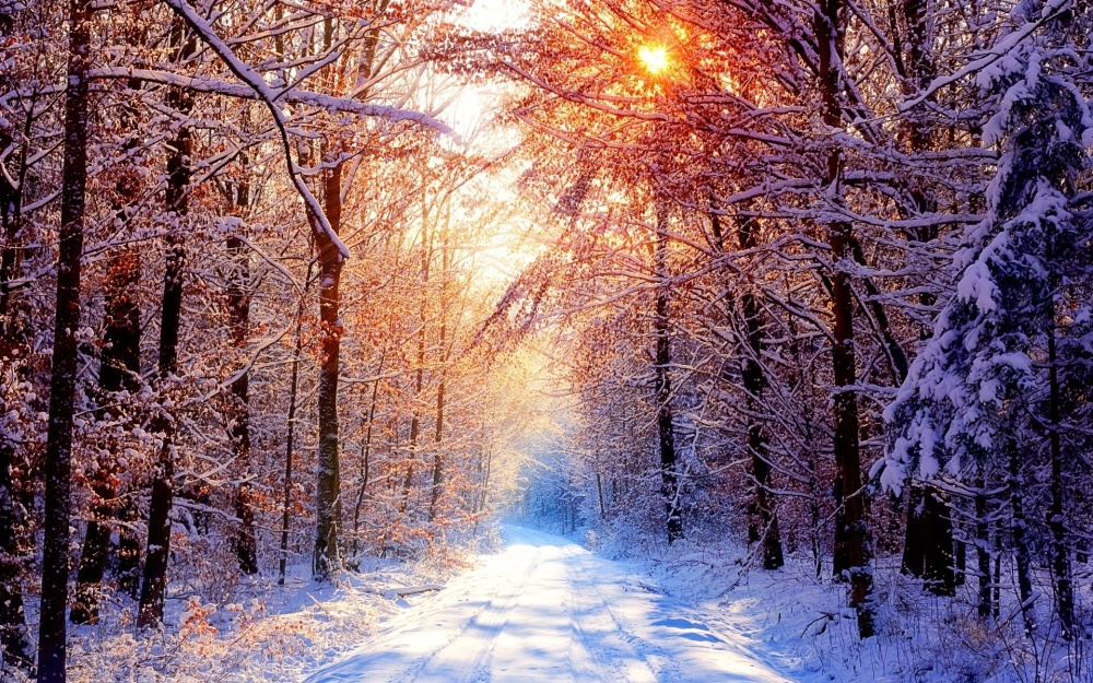 Trees-in-winter-natures-seasons-22173937-1920-1200